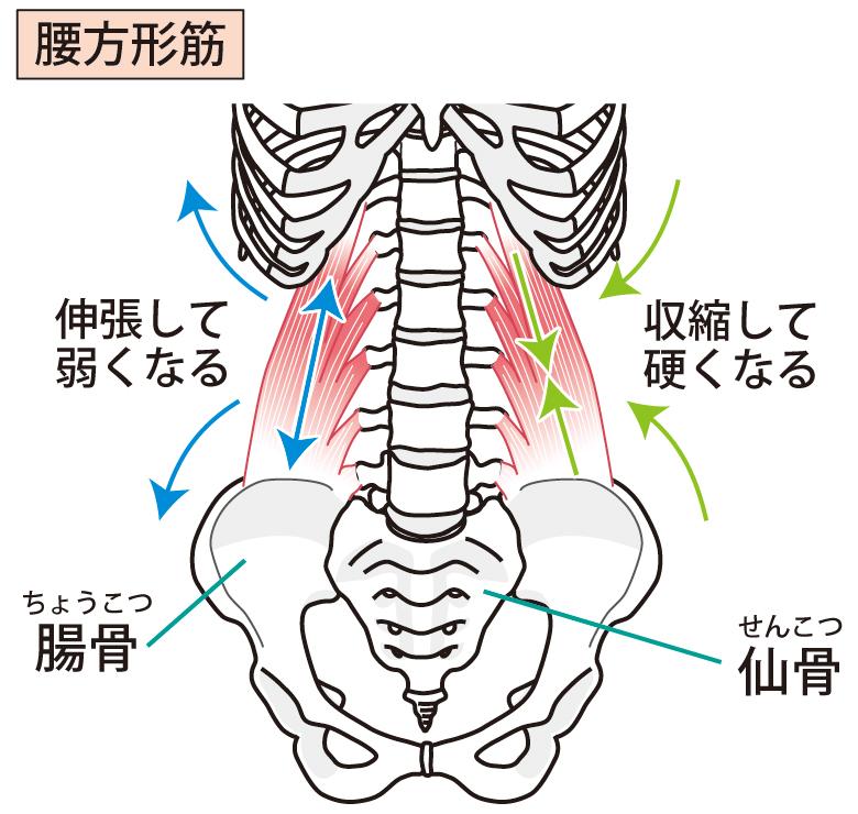 深層筋のマヒ