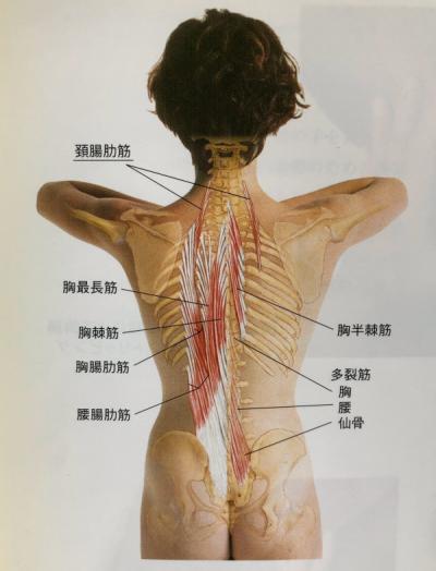 背中にある筋肉
